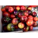 Special offer / 4 varieties Indigo